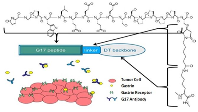 PAS-G17-antibody-response